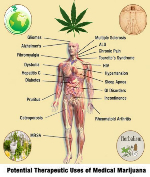 herbal-benefits-of-medical-marijuana-637x750
